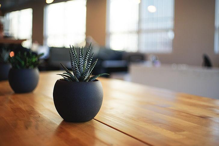 Black Planters Pots
